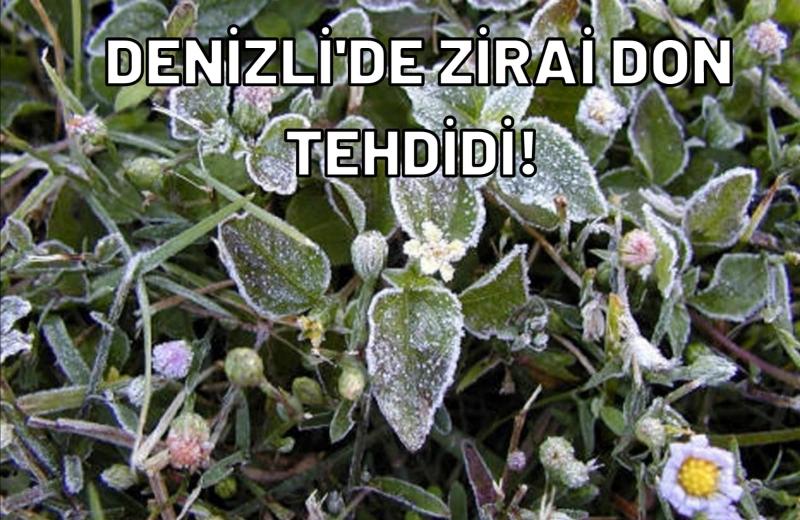 Denizli'de Zirai Don Tehdidi!