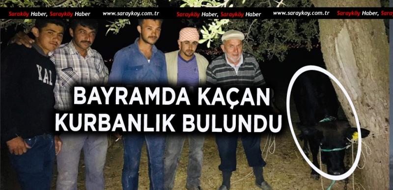 FİRARİ KURBANLIK YAKALANDI