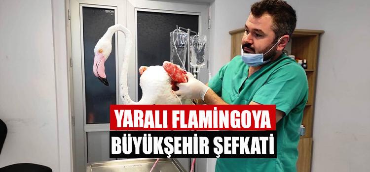 Yaralı Flamingoya Büyükşehir Şefkati