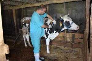 Denizli'de Sonbahar Dönemi Şap Aşıları Yapılmaya Başlandı