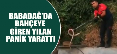 Evin bahçesindeki yılan panik yaşattı