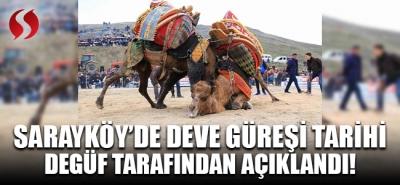 Sarayköy'de deve güreşi tarihi DEGÜF tarafından açıklandı!
