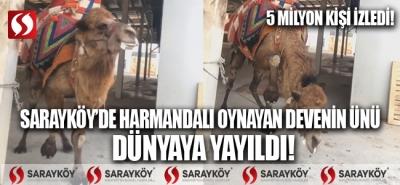 Sarayköy'de harmandalı oynayan devenin ünü dünyaya yayıldı! 5 milyon kişi tarafından izlendi.